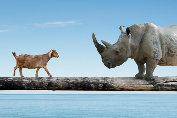 Rhinoceros and sheep walking over the single wooden bridge